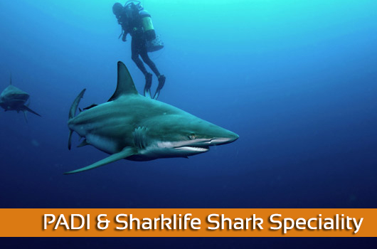 PADI & Sharklife Shark Speciality