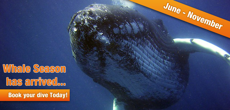 HUMPBACK WHALES ... THE GIANTS OF OUR SEA!