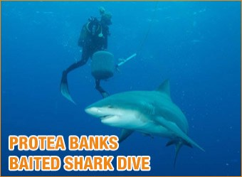 cat-diving-Protea-Banks-Baited-shark-dive2
