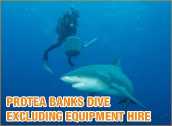cat-diving-Protea-Banks-excluding-equipment-hire3