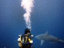 Our VIP Diver with a Bull shark
