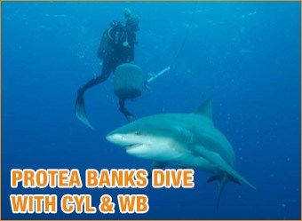 cat-diving-Protea-Banks-with-cyl-&-wb7
