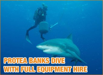 cat-diving-Protea-Banks-with-full-equipment