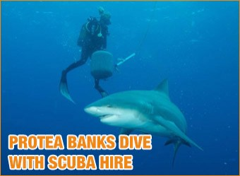 cat-diving-Protea-Banks-with-scuba